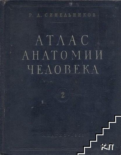 Атлас анатомии человека в двух томах. Том 2