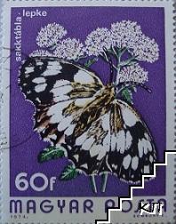 Пеперуди - Sakktabla-lepke