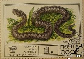 Змии - Гадюка обыкновенная