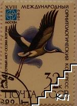 Птици - ciconia boycina
