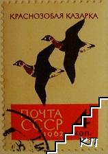 Птици - Краснозобая казарка