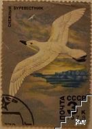 Птици - Снежный буревестник