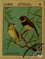 Птици - Tomeguin del pinar