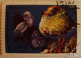 Птици - Беризинский заповедник
