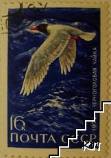 Птици - Черноголовая чайка