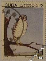 Птици - Gymnoglaux