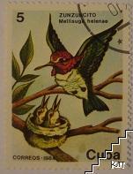 Птици - Zunzuncito