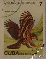 Птици - Aquila borrasi