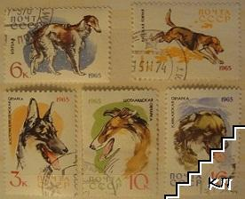 Кучета - лот от пет марки