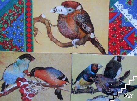Птици, рисувани, без имена