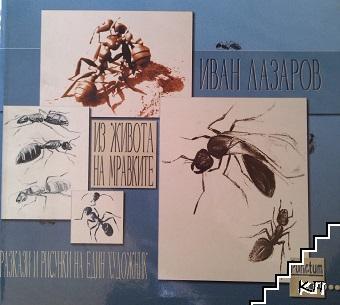 Из живота на мравките
