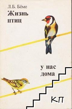 Жизнь птиц у нас дома