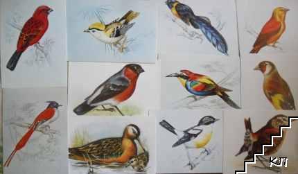 Птици с имена. Лот от единадесет картички с рисунки
