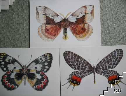 Пеперуди. Лот от 3 различни пеперуди