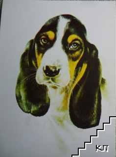 Басет - порода куче