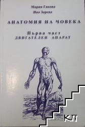 Анатомия на човека. Част 1: Двигателен апарат
