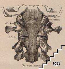 Описательная и топографическая анатомия человека. Атласъ д-ра Гейцмана. Книга 1-2 (Допълнителна снимка 1)