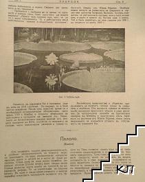 Природа. Кн. 1-10 / 1929 (Допълнителна снимка 2)