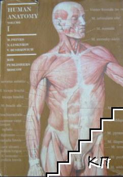 Human Anatomy. Vol. 1: The Weight-Bearing and Locomotor System, the Science of the Viscera, the Science of the Organs of Internal Secretion