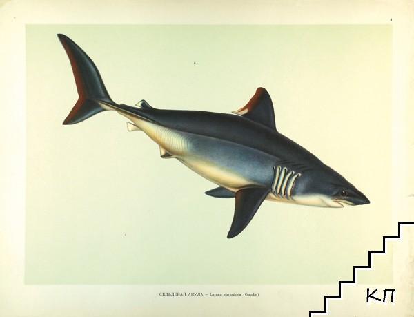 Промысловые рыбы СССР (Допълнителна снимка 1)