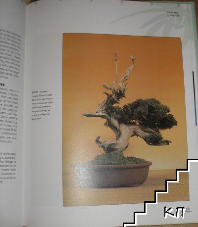 The Bonsai Identifier (Допълнителна снимка 1)