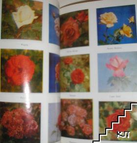 Рози (Допълнителна снимка 1)