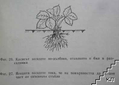 Малка овощна градина. Част 1: Овощарство (Допълнителна снимка 3)