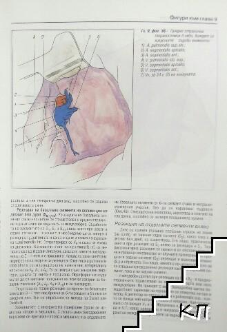 Торакална хирургия (Допълнителна снимка 3)