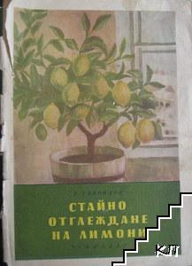 Стайно отглеждане на лимони