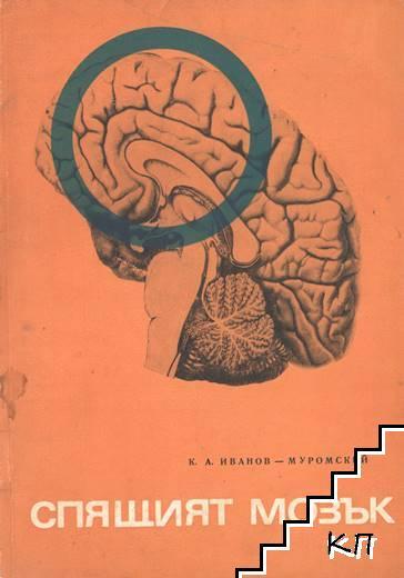 Спящият мозък