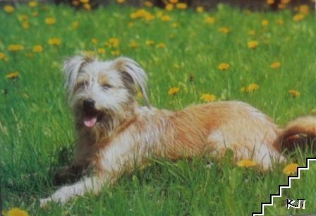Териер - порода куче