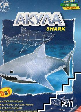 Хартиен модел - Акула