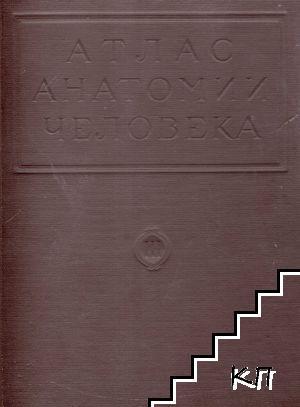 Атлас анатомии человека в пяти томах. Том 3