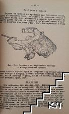 Акушерска помощ при селскостопанските животни (Допълнителна снимка 1)
