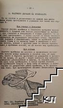 Акушерска помощ при селскостопанските животни (Допълнителна снимка 2)