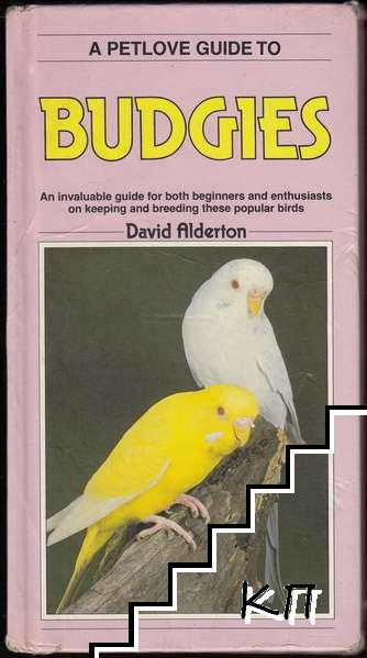 A Petlove Guide to Budgies