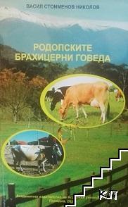 Родопските брахицерни говеда