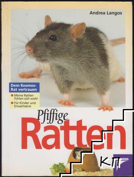 Pfiffige Ratten