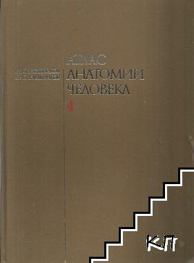 Атлас анатомии человека в четырех томах. Том 4: Учение о нервной системе и орсанах чуства