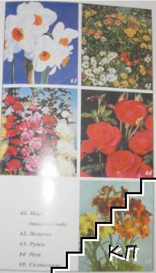 Цветя в градината (Допълнителна снимка 2)