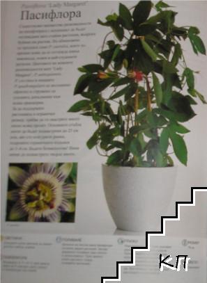 Стайни растения / Цветен разкош (Допълнителна снимка 1)
