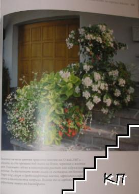 Стайни растения / Цветен разкош (Допълнителна снимка 2)
