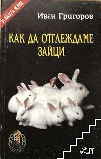 Как да отглеждаме зайци