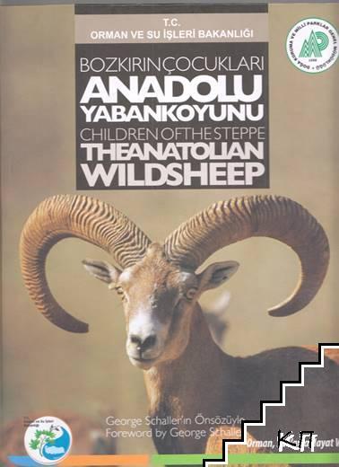 Bozkırın Çocukları: Anadolu Yaban Koyunu / Children of the Speppe the Anatolian Wild Sheep