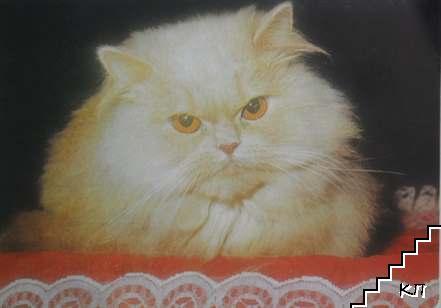 Домашна котка - златиста, дългокосместа на черен фон