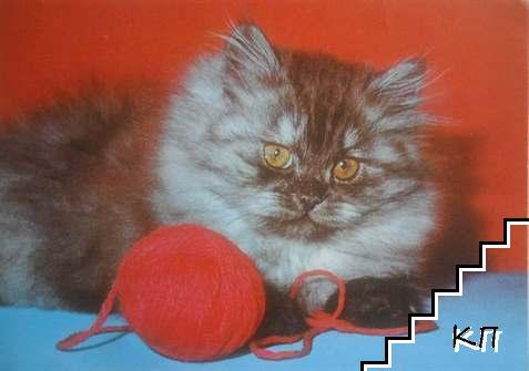 Домашна котка - светлосива с кълбо на червен фон