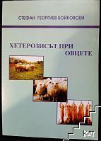 Хетерозисът при овце