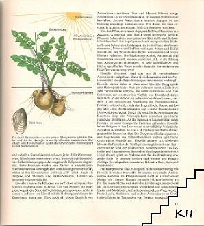 Früchte der Erde (Допълнителна снимка 1)