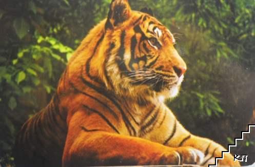 Тигър. 2016 г.