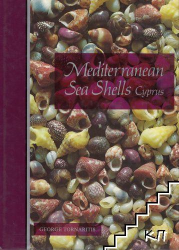 Mediterranean sea shells: Cyprus